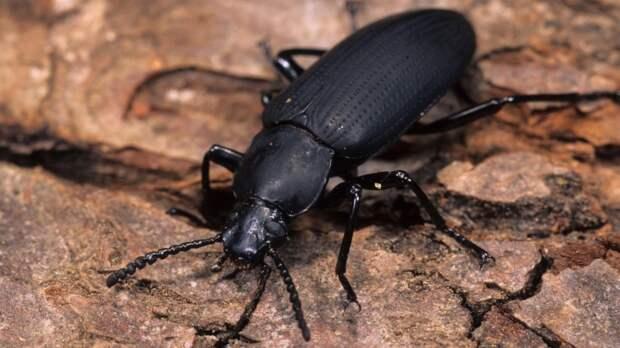 Якутские ученые выявили способность к расщеплению пластика у жуков