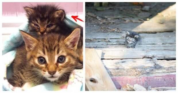 """""""Мы стали перед бульдозером, чтобы защитить крошек!"""" История котёнка, спасшего 60 душ"""
