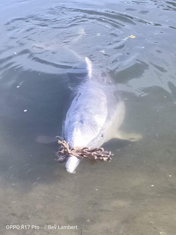 Дельфин из Австралии так соскучился по людям, что начал приносить им дары со дна Океана
