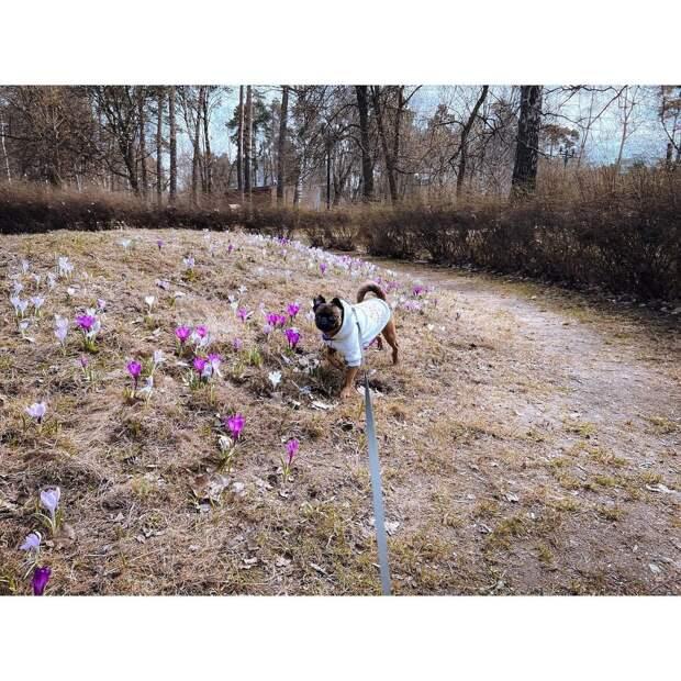 Фото дня: модный пес из Лосинки любовался весенними цветами