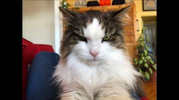 Сейчас будет кусь! 15 смешных фото сердитых кошек