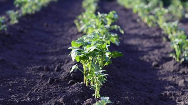 Дачникам посоветовали модную и полезную зелень для раннего весеннего посева
