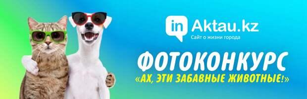 inAktau.kz объявляет фотоконкурс с призами «Ах, эти забавные животные!»
