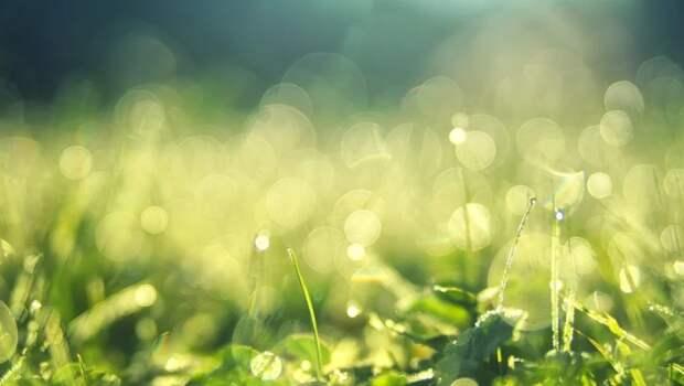 В Красностуденческом перестанут косить газон триммерами
