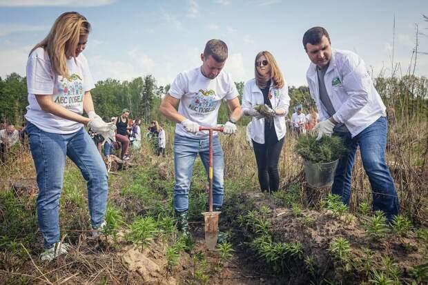 Почти 10 тысяч саженцев «Леса Победы» высадили в Балашихе