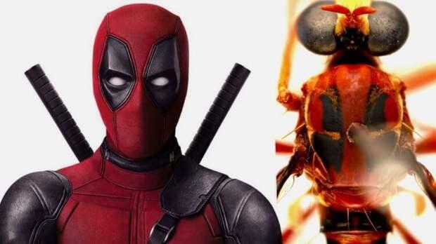 Новых насекомых называют в честь героев вселенной Marvel