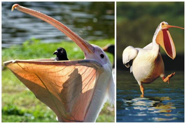 Немного о птицах