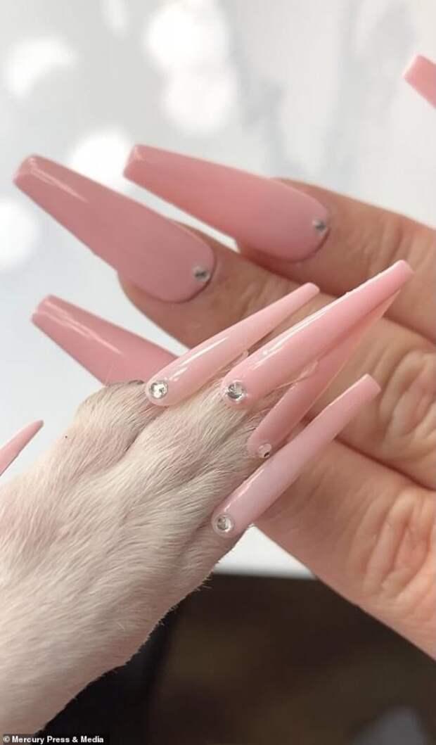 Если сделать чихуахуа накладные ногти, это еще маникюр или уже педикюр?