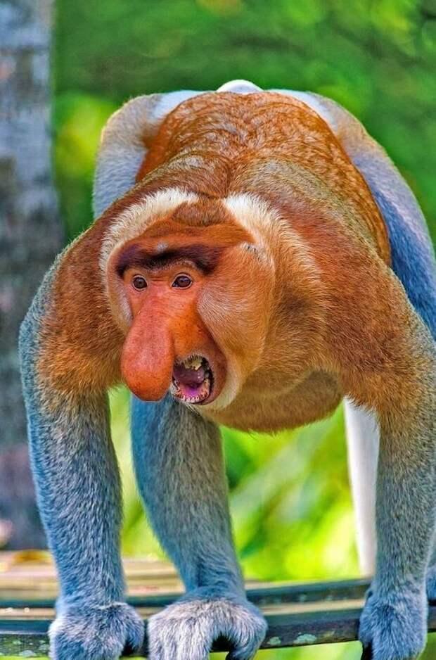 15 животных, чьи носы так и лезут куда не следует животные, интересное, мир, носатые, природа, фауна