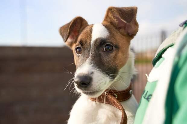 Датский пес получил компенсацию за отмену рейса