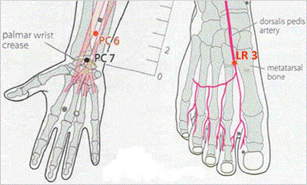 http://estet-portal.com/images/articles/akupunkturnye-tochki-dlya-pokhudeniya-3.jpg