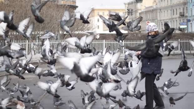 Общее количество птиц на Земле превысило численность людей