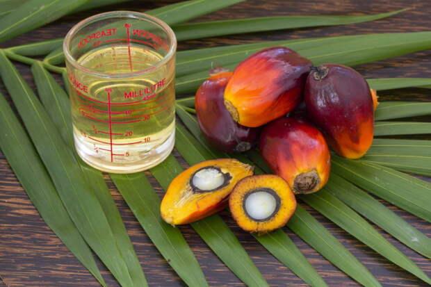 Кратко пальмовом масле