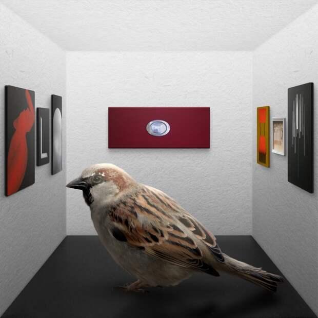 «Птицы похожи на арт-критиков»: петербургский художник установил на Каменном острове кормушку с картинами. Вот что хотел сказать автор  ️
