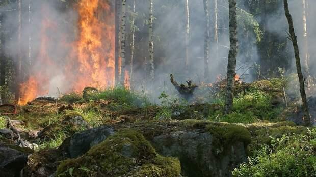 Пожар в Анталье не отразится на пребывании российских туристов в городе