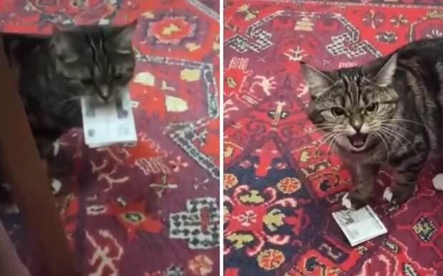 «Теперь они мои»: кот взял у хозяев деньги на вискас