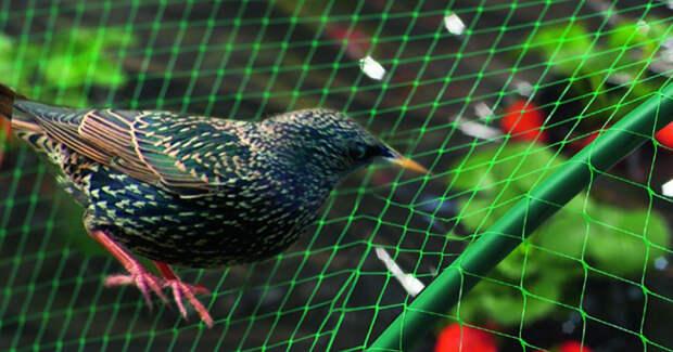 Сетка от птиц – что это такое, помогает ли она, как выглядит сетка, описание разных вариантов