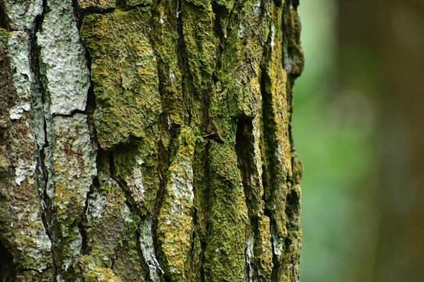 Деревья на Живописной спилили для реконструкции газопровода