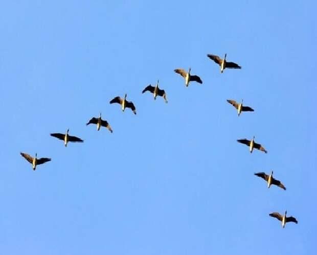 8 интересных фактов о птицах
