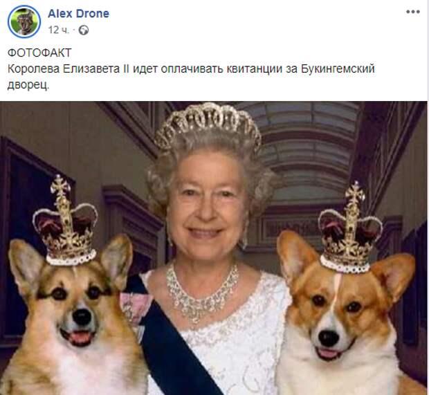 «А давай, Шарик, мы тебя продадим»: реакция Сети на предложение депутата пенсионерам продавать собак для оплаты ЖКХ