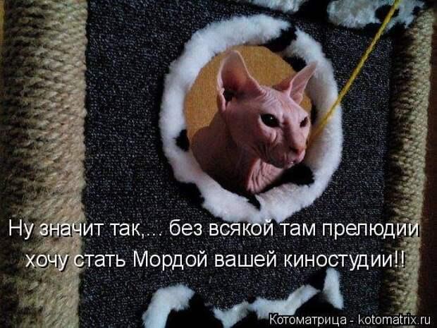 1474017308_kotomatricy-9