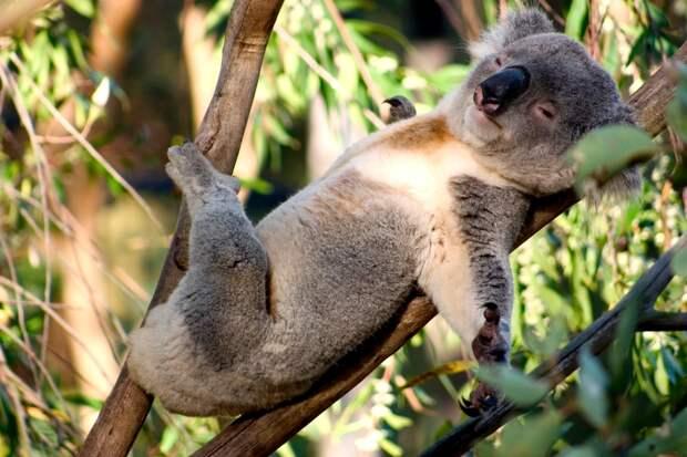 Не мешайте отдыхать труженикам ! Узнай, как и сколько спят разные животные!