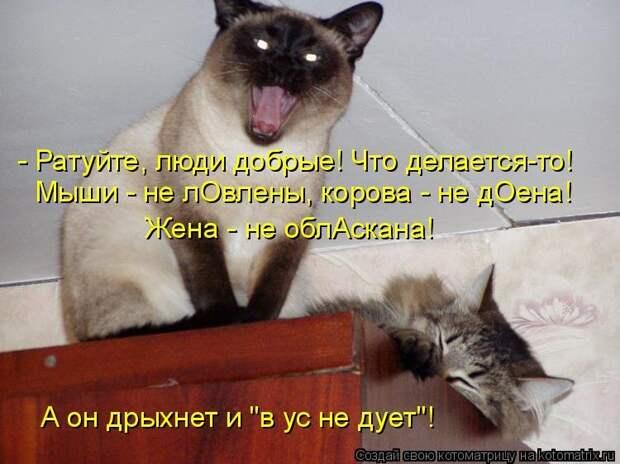 1474017320_kotomatricy-21