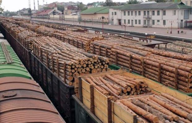 Export lesa