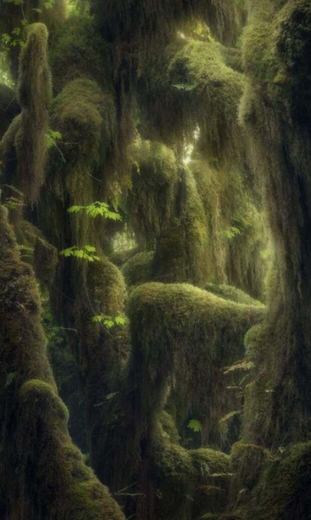 Тропический лес, Вашингтон, США. Фото: Блейк Рэндалл.