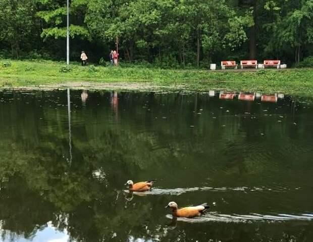 Вековые дубы и пруд: Лианозовский заказник отлично спасает от жары