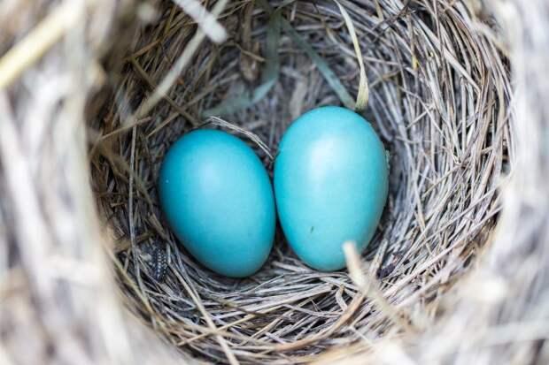 Редкие краснокнижные птицы вывели потомство в парке «Кузьминки-Люблино»