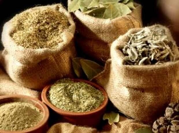 Сбор, сушка и хранение лекарственного растительного сырья