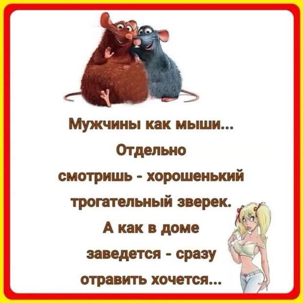 Маленькая девочка заходит в зоомагазин: — Я хотела бы купить кролика...