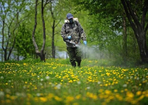 Горячая линия по вопросам клещевого энцефалита запущена в Ростовской области