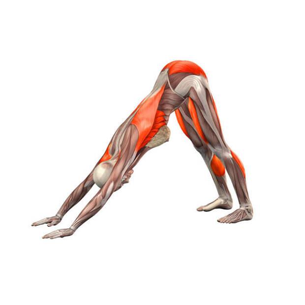 Лучшие упражнения для поясничной мышцы (мышцы Души)