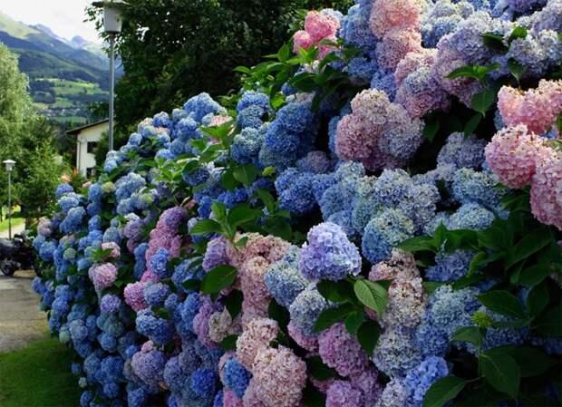 Зимостойкие кустарники, способные превратить сад в сказку
