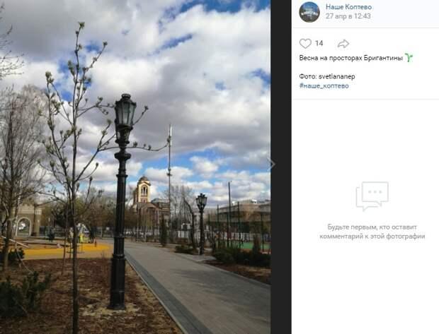 Фото дня: парк «Бригантина» украсили свежие листочки