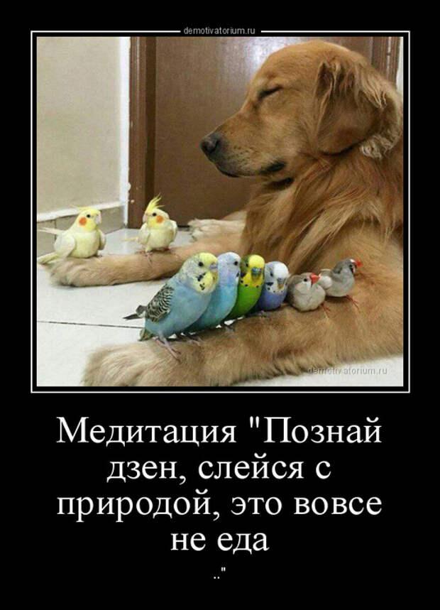 5402287_demotivatorium_ru_meditacijapoznaj_dzen_slejsja_s_prirodoj_eto_vovse_ne_eda_89553 (504x700, 117Kb)