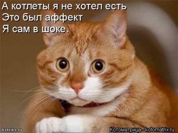 1413567475_kotomatricy-12