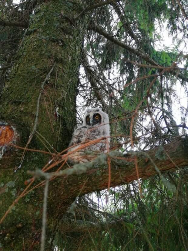Пожилая пара присматривает за совятами, которые выпали из гнезда