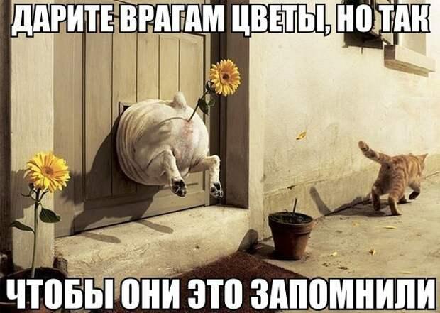 MKvOpau15o8