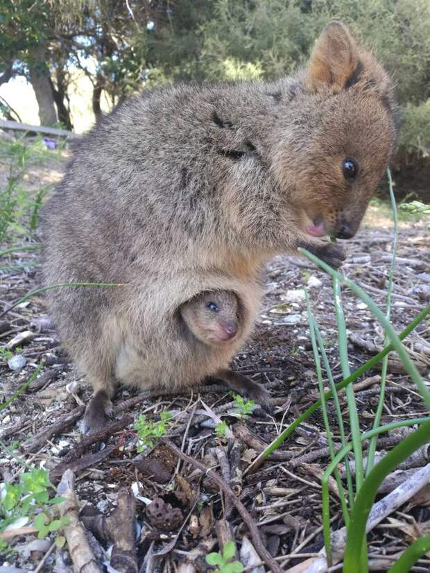 22 веские причины никогда небывать вАвстралии