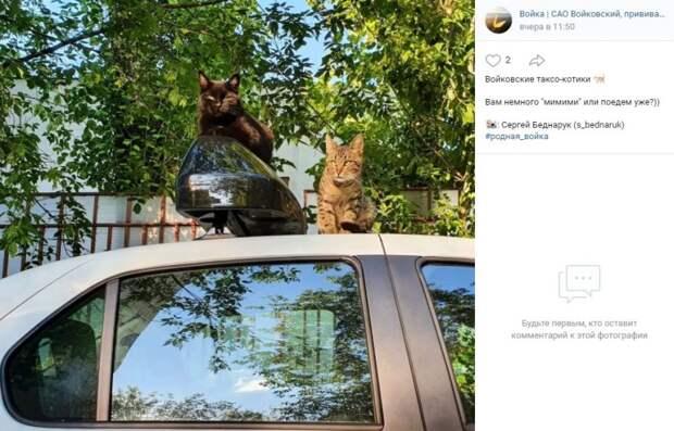 Фото дня: будни пушистых жителей Войковского