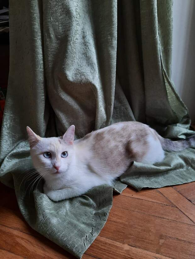 Приютили на две недели кота свекрови. Наша кошка ему житья не дает
