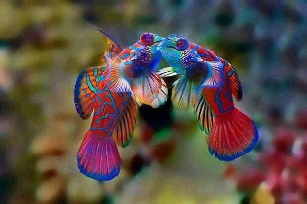 Природа - лучший художник: 40 животных неожиданной расцветки - 29