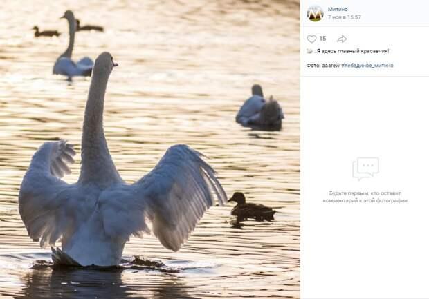 Фото дня: главный красавчик Пенягинского пруда