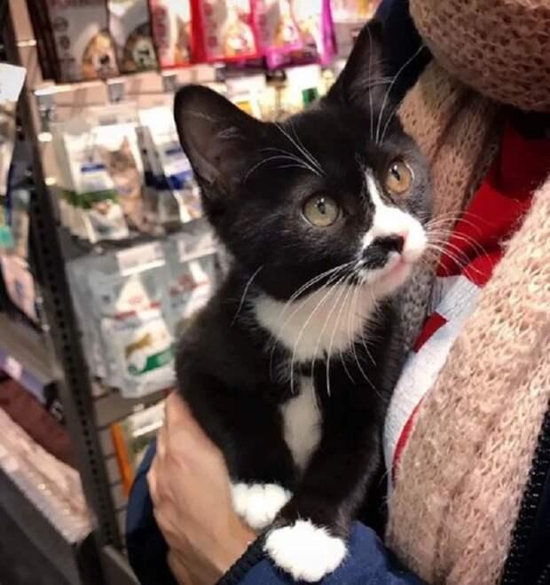 Худенький котёнок бродил по улицам в одиночестве, и судьба его могла быть очень печальной