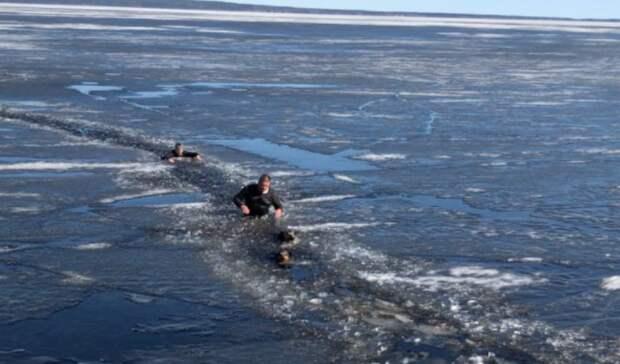 ВПетрозаводске прохожие спасли провалившихся под лёд собак