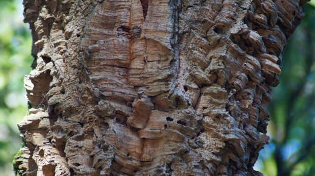 Деревья являющиеся сильными энергетическими донорами