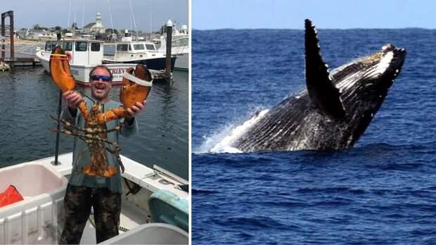 Горбатый кит проглотил дайвера и выплюнул его обратно